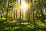 Sunlight in the Green Forest Poster by  egal