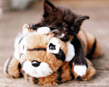 Kitten - Tiger Toy Print