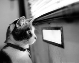 Kitten - Letterbox Posters