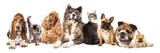 Group of Dogs and Cat Different Breeds, Cat and Dog Photographic Print by  Lilun