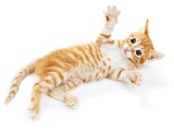 Cute Little Red Kitten Isolated on White Prints by  Yastremska