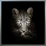 Cheetah Framed Canvas Print