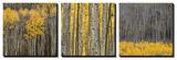 Jamie Cook - Aspen Trees Obrazy
