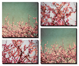 Cherry Blossoms Prints by Susan Bryant