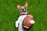 American Football Dog Photographic Print by Javier Brosch