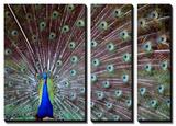 Gail Peck - Wild Beauty I Obrazy