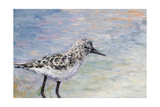 Sandpiper I Reproduction procédé giclée par Walt Johnson