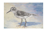 Sandpiper II Reproduction procédé giclée par Walt Johnson