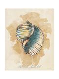 Conch Shell Premium Giclee Print by Lanie Loreth