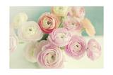 Blushing Blossoms Premium Giclee Print by Sarah Gardner
