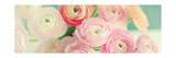 Blushing Blossoms Panel Print by Sarah Gardner