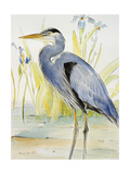 Great Blue Heron Giclee Print by Lanie Loreth