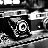 Rare Finds I Fotografisk tryk af Susan Bryant