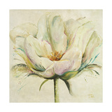 White Double Tulips II Premium Giclee Print by Patricia Quintero-Pinto