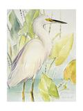 Snowy Egret Giclee Print by Lanie Loreth