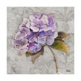 Lavender Flourish Square II Premium Giclee Print by Patricia Quintero-Pinto
