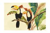 Tropical Toucans I Premium Giclee Print by Linda Baliko