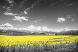 Oilseed Rape Fields Photographic Print by Rainer Maria