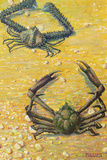 Two Spider Crabs Giclee Print by William H. Crowder