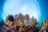 Corals in the Tropical Sea. Indonesia Photo by Dudarev Mikhail