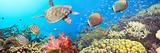 Underwater Panorama Photographic Print by  GoodOlga