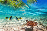 Green Turtle Swimming at Tropical Island of Caribbean Sea Photographic Print by Patryk Kosmider