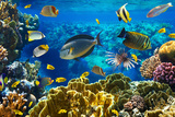 Photo of a Tropical Fish on a Coral Reef Prints by  Irochka