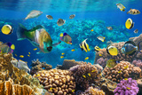Photo of a Tropical Fish on a Coral Reef Posters by  Irochka