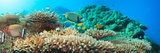 Underwater Panorama with Coral and Fishes. Andaman Sea. Merged from 5 Images Photographic Print by  GoodOlga
