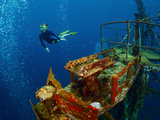 Free Diver Exploring the Ship Wreck in Tropical Sea Posters by Dudarev Mikhail