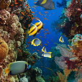 Coral and Fish in the Red Sea.Egypt Photographic Print by  Irochka