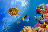 Underwater Landscape with Couple of Butterflyfishes and Turtle Photographic Print by  Vlad61
