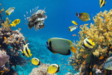 Coral and Fish in the Red Sea.Egypt Posters by  Irochka