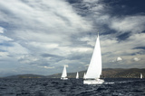 Sailing Ship Yachts with White Sails in a Row. Posters by De Visu