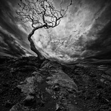 Dramatic Sky over Old Lonely Tree Print by NejroN Photo