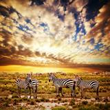 Zebras Herd on Savanna at Sunset, Africa. Safari in Serengeti, Tanzania Photo by PHOTOCREO Michal Bednarek