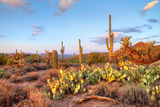 Sonoran Desert Photographic Print by Anton Foltin