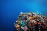 Coral Reef in a Tropical Sea. Philippines, Balicasag Island Photographic Print by Dudarev Mikhail
