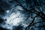 Scary Dark Scenery with Naked Trees, Full Moon and Clouds Photographic Print by  pashabo