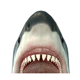 Great White Shark Jaws Premium Giclee Print by Corey Ford