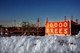 Christmas Trees For Sale Sag Harbor NY Prints