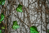 Leaves and Vines Print