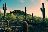 Desert Garden in Arizona Photo