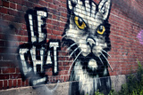 Le Chat Graffiti Montreal Canada Photo