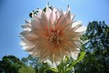 Flower in Full Bloom Fotografía