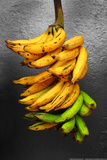 Yellow Bananas Prints