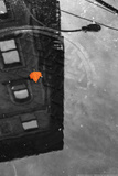 Colorful Leaf In B/W Reflection NYC Photo