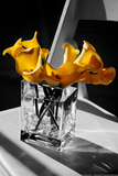 Yellow Calla Lilies in Vase Posters