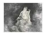 Wolf, Handmade Illustration on Grey Background Prints by  outsiderzone