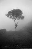 Lone Tree Macchu Picchu Peru Photo